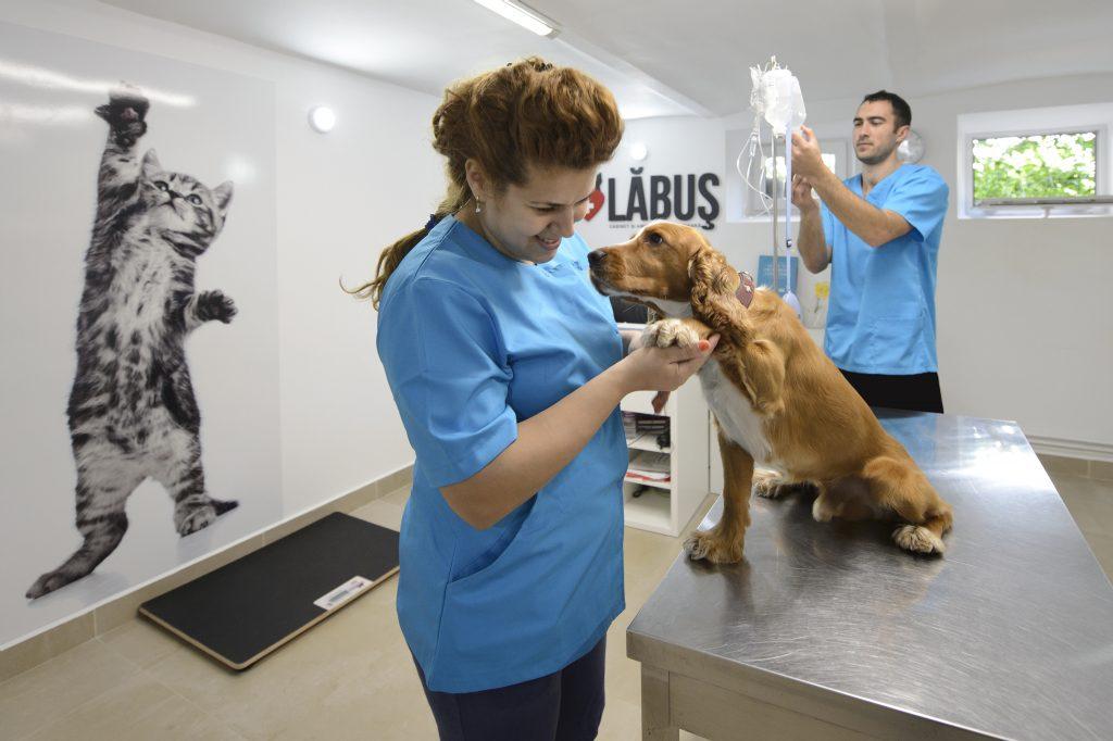 cabinet veterinar non stop