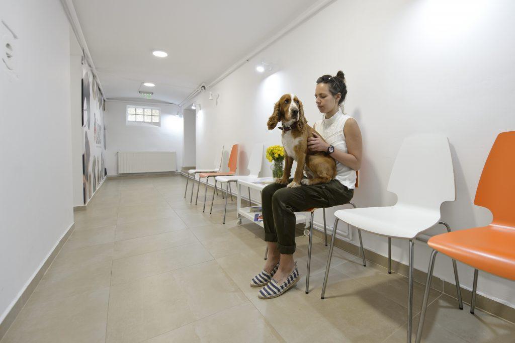 cabinet veterinar brasov